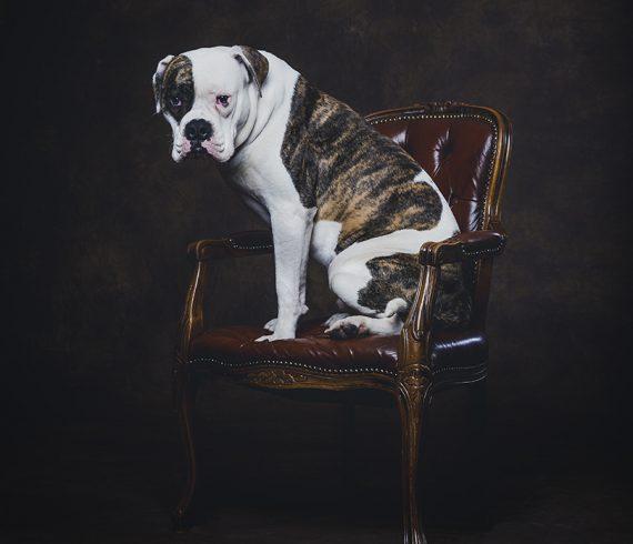 fotografie, fotostudio de aap, honden